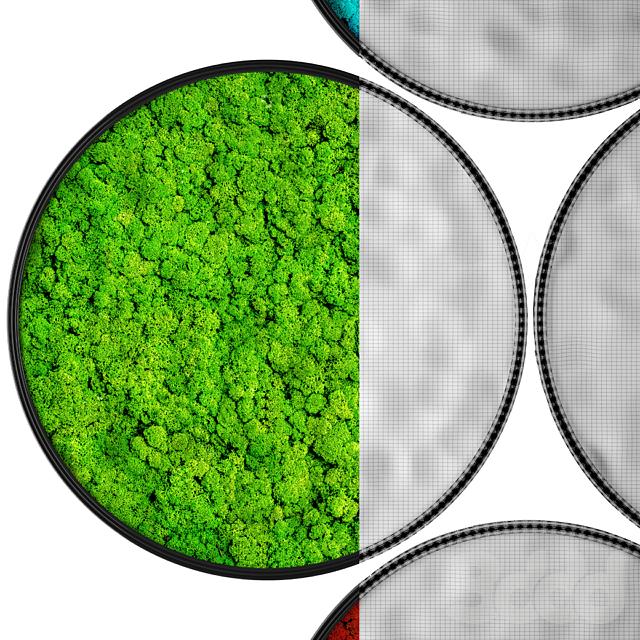Vertical garden 11. Stabilized moss