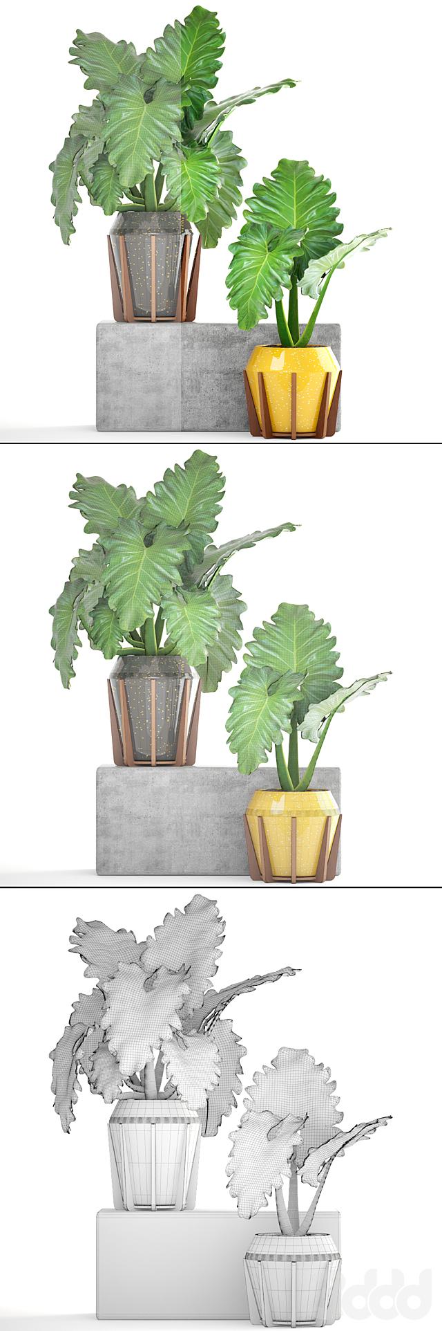 Коллекция растений 154. tropical plant