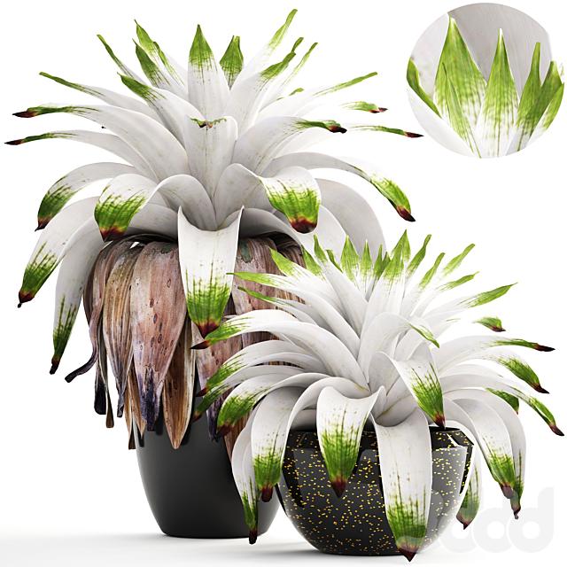 Коллекция растений 156. Bromelia