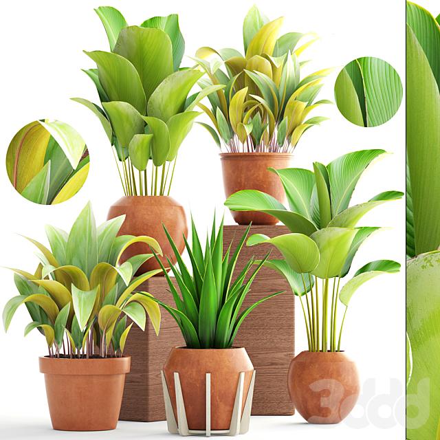 Коллекция растений 172. Clay pots.