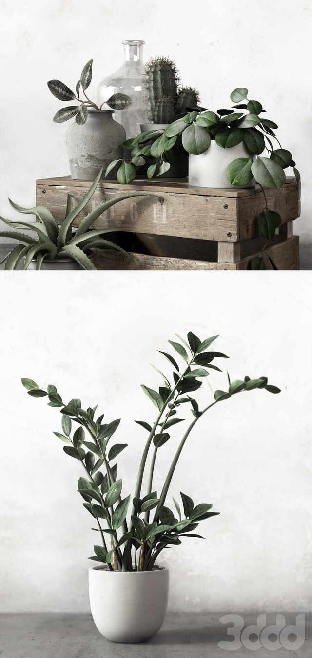 PLANTSET 2