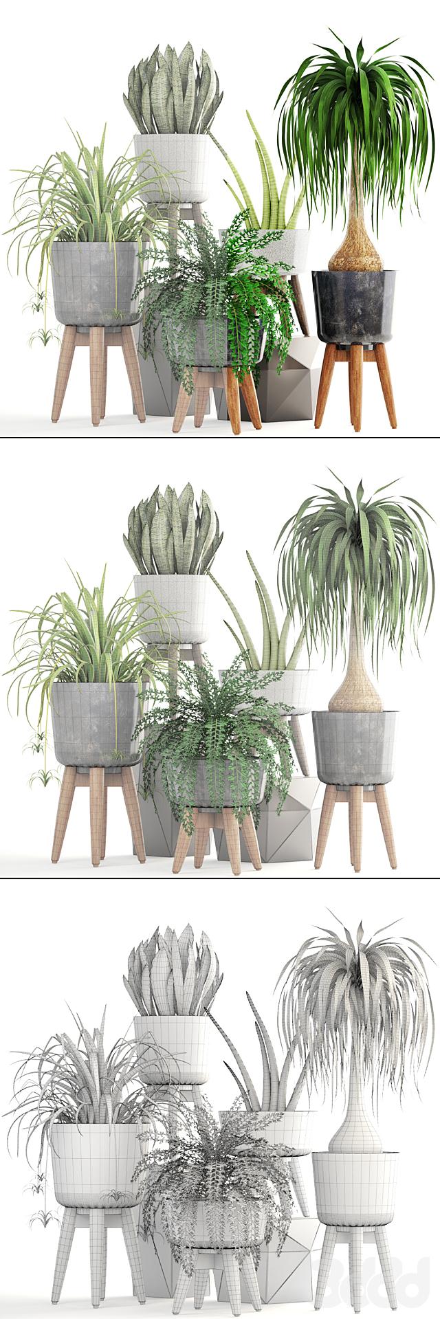 Коллекция растений 182.