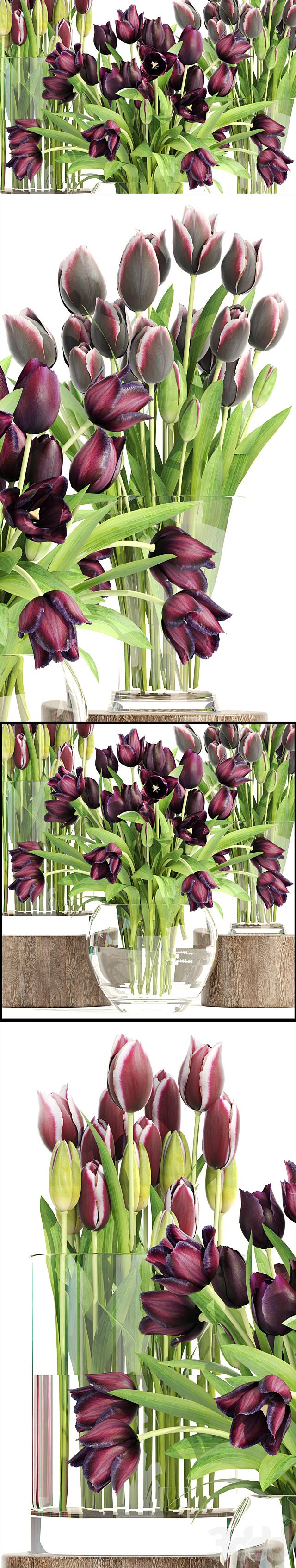 Коллекция цветов 1. Тюльпаны.