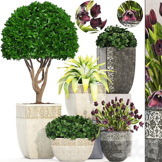 Коллекция растений 193