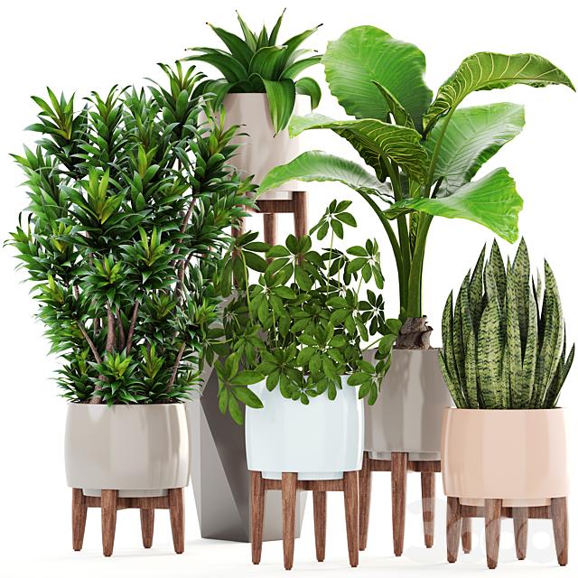 Коллекция растений 196