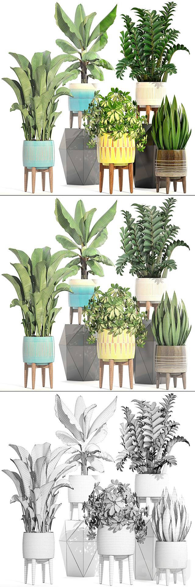 Коллекция растений 197