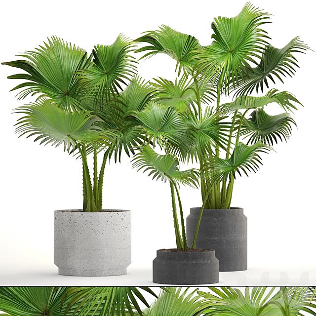 Коллекция растений 207. PALMS
