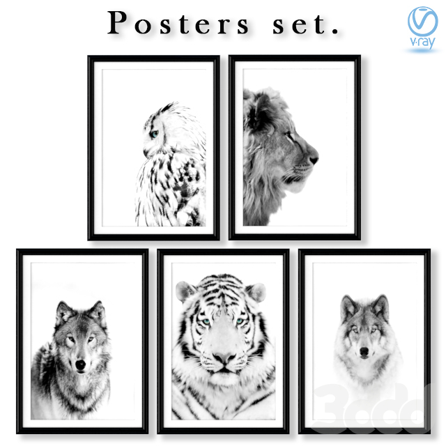 Коллекция чёрно-белых постеров с хищниками.