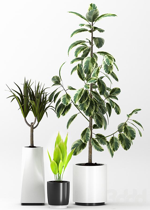 Plant 62