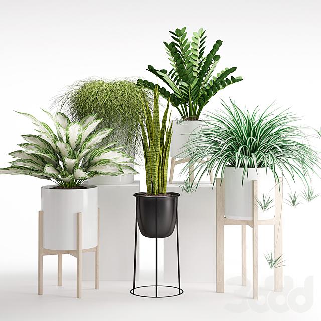 Комнатное растение 23