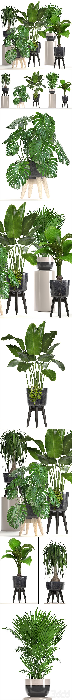 Коллекция растений 220.