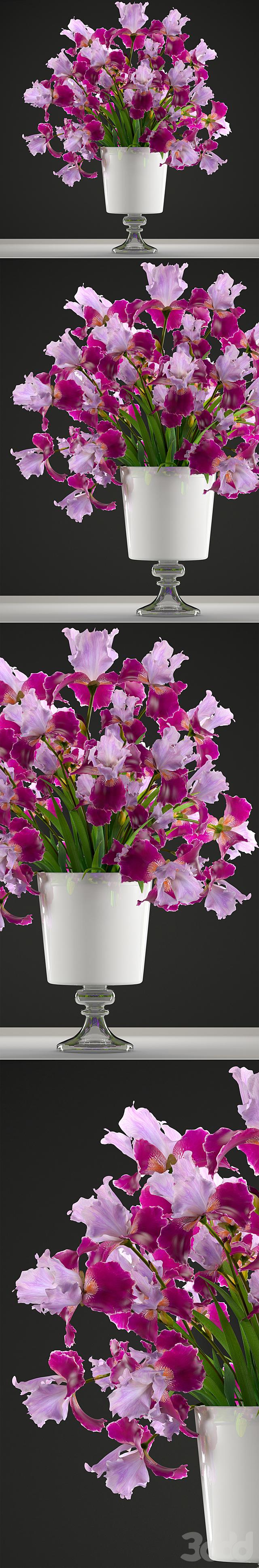 Коллекция цветов 43. Ирис