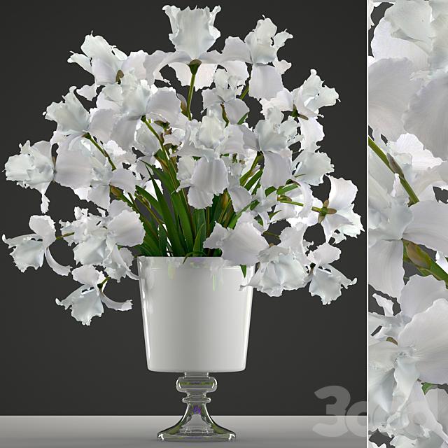 Коллекция цветов 45. Белые Ирисы.