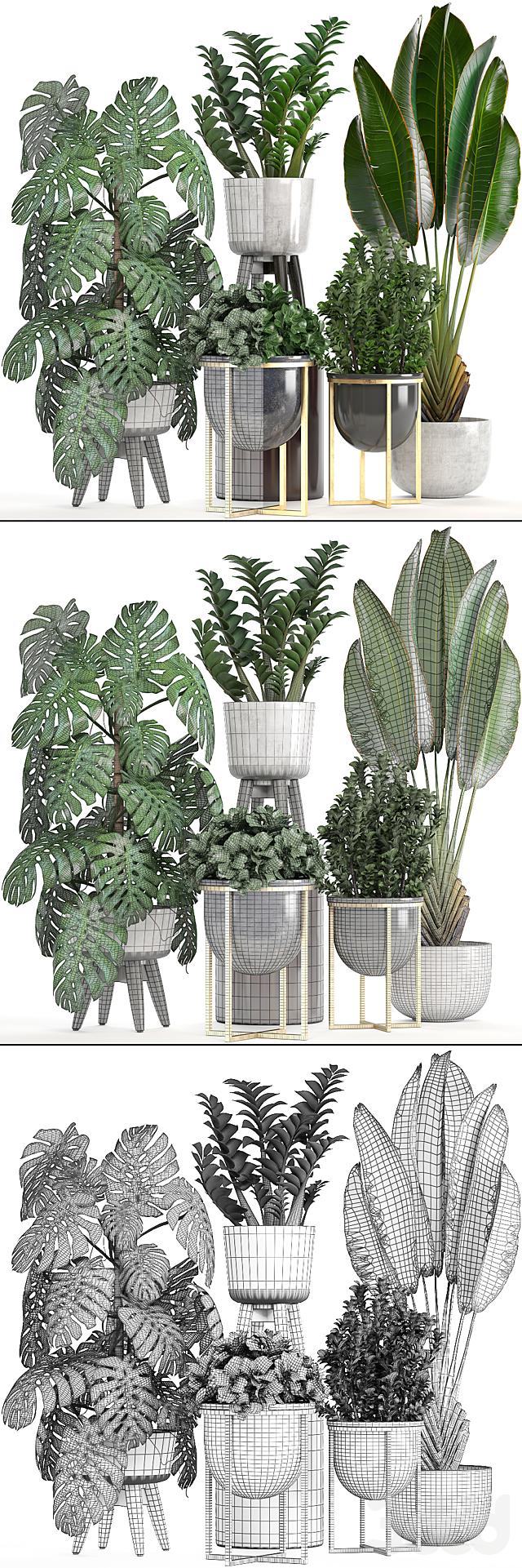 Коллекция растений 222.