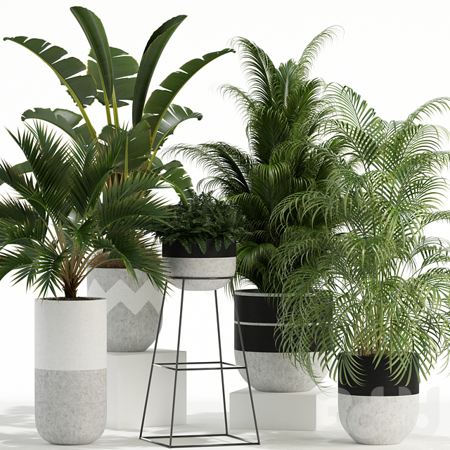 Plants collection 110