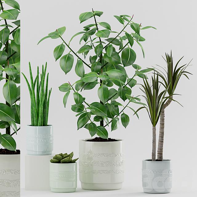 Plant 87