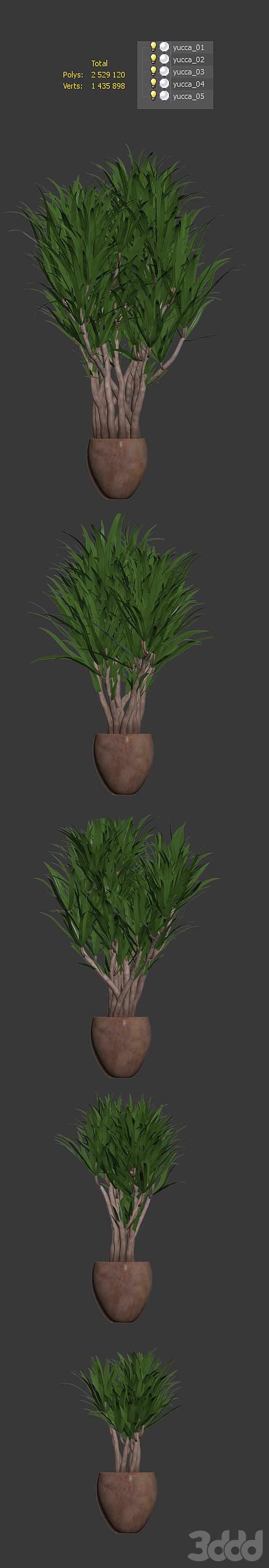 Набор растений юкк