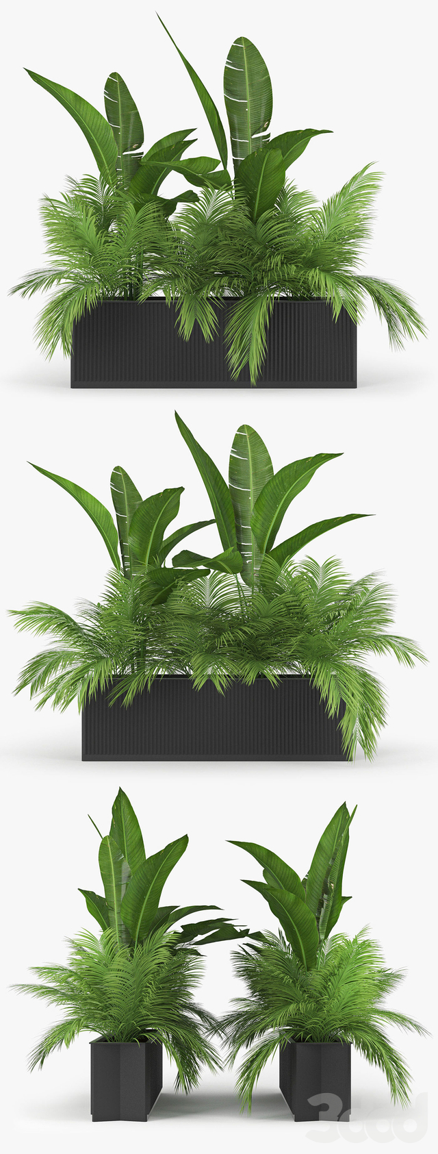 Flowerbed Palm Two