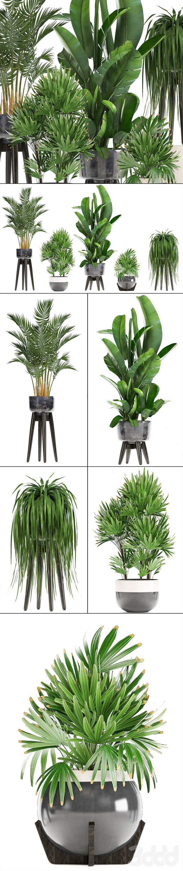 Коллекция растений 231.