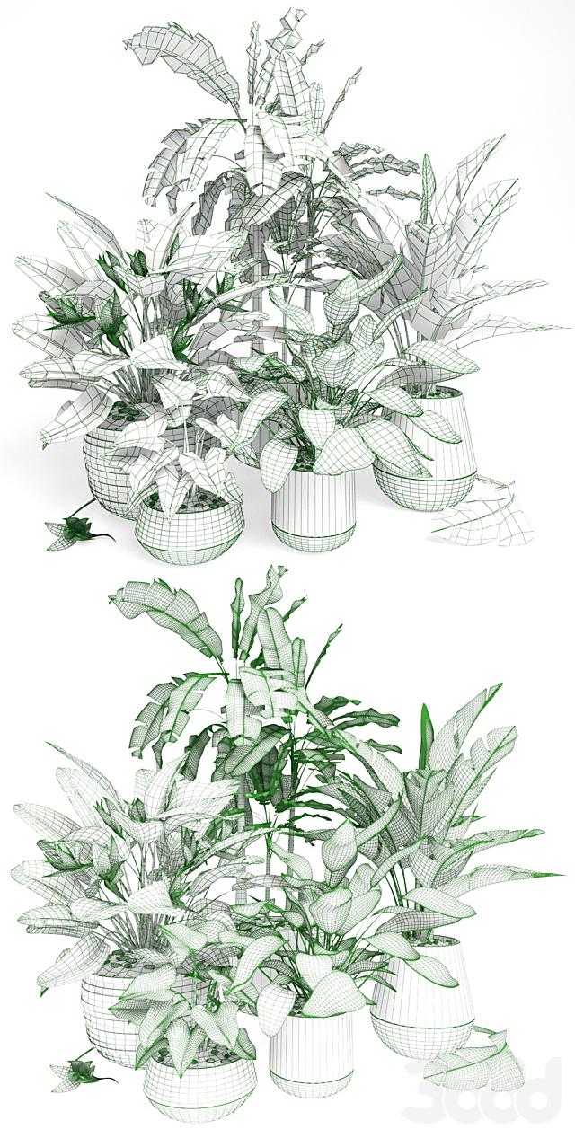 Plants tropic 01