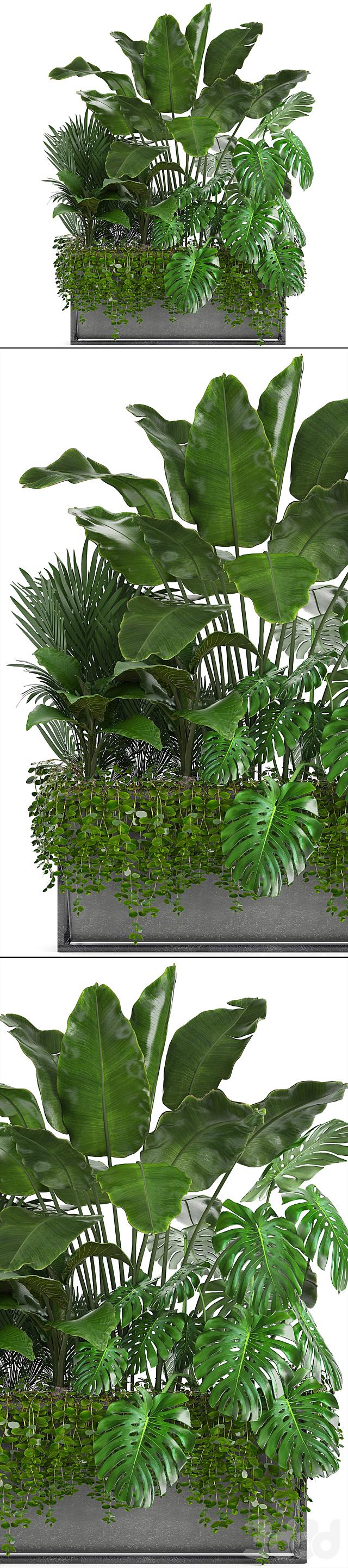 Коллекция растений 244.