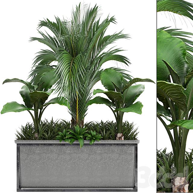 Коллекция растений 245.