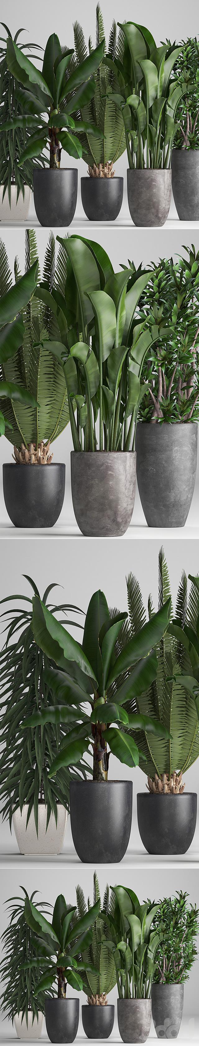 Коллекция растений 255.