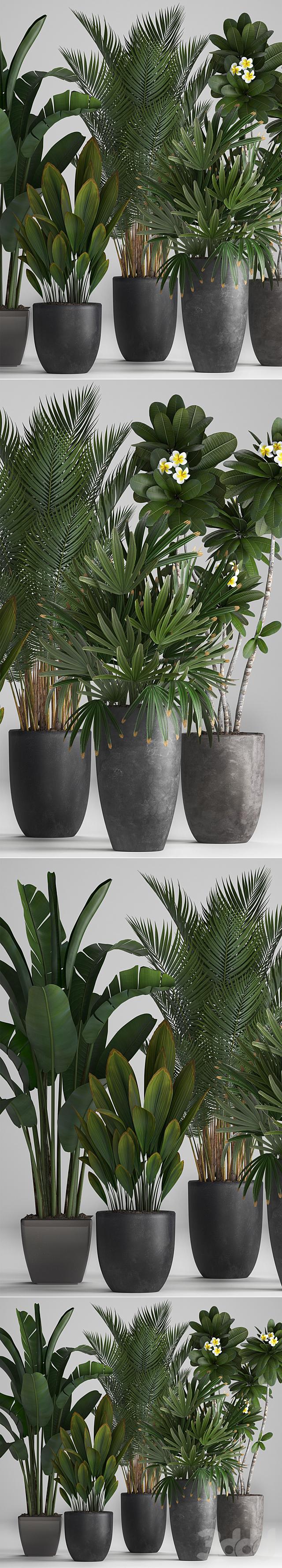 Коллекция растений 256.