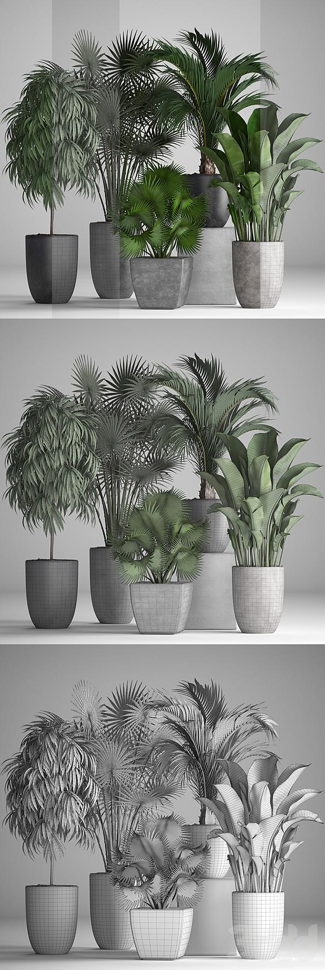 Коллекция растений 258.