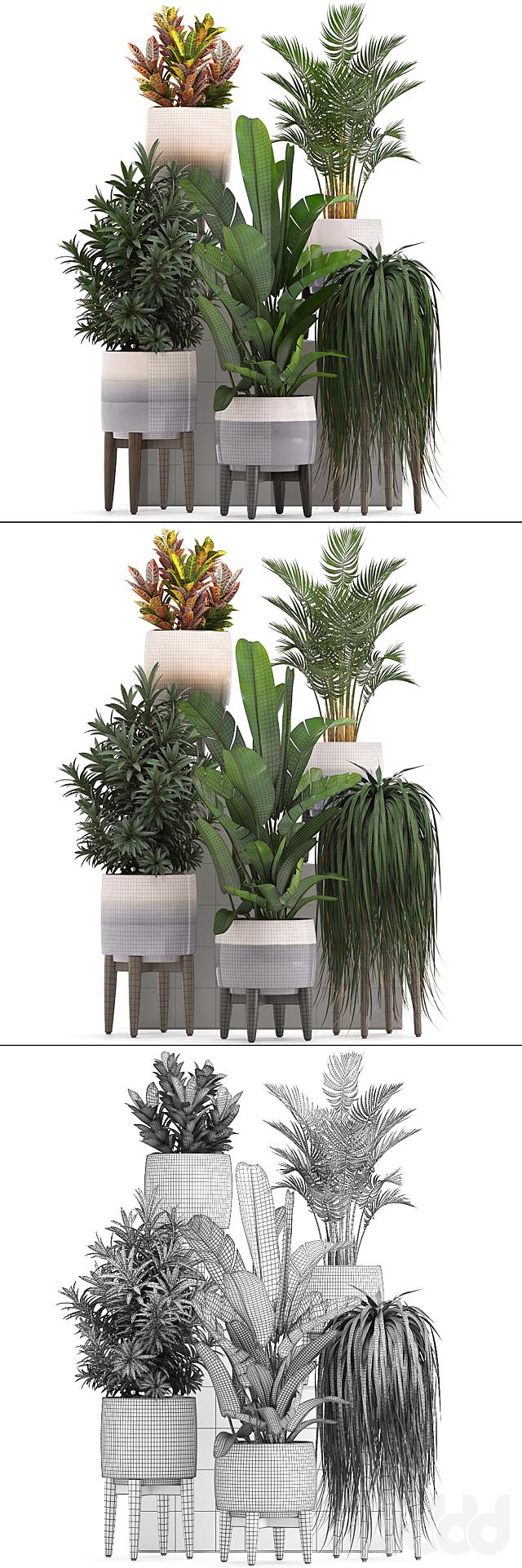 Коллекция растений 278.