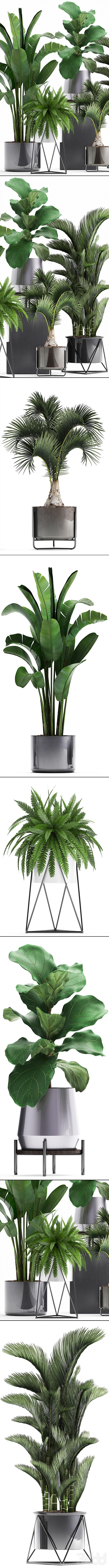 Коллекция растений 290.