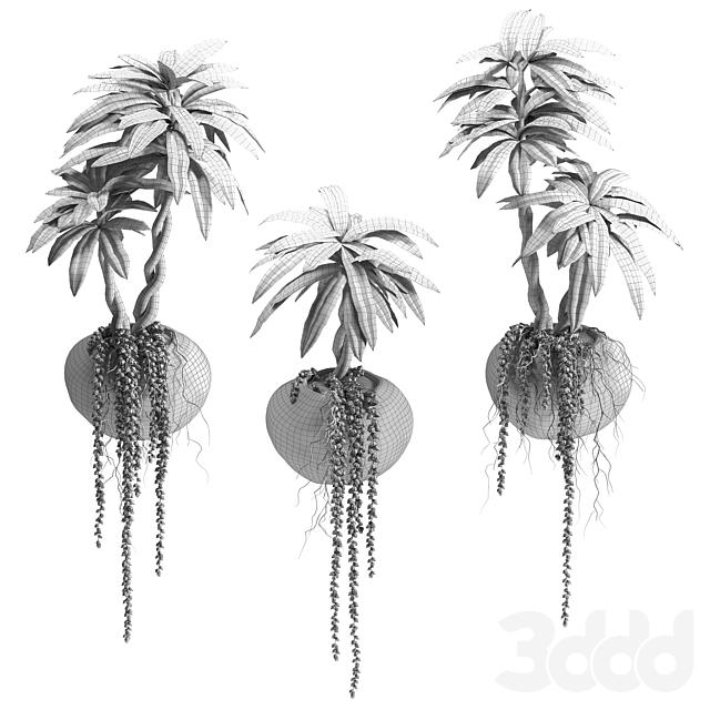 Суккуленты и пальма в настенных горшках