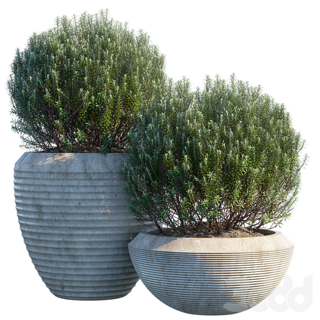 Plant in pots #3