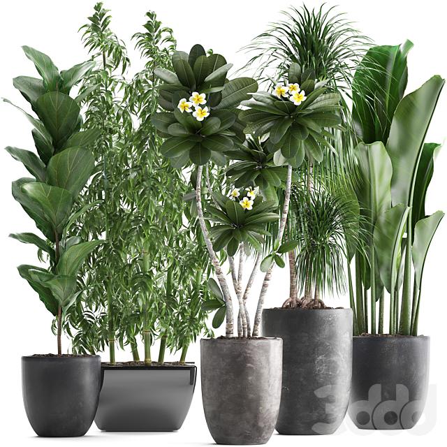 Коллекция растений 311.