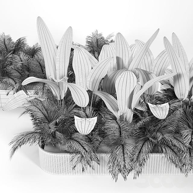 Flowerbed Palm