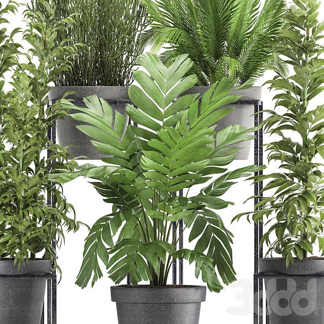Коллекция растений 317.