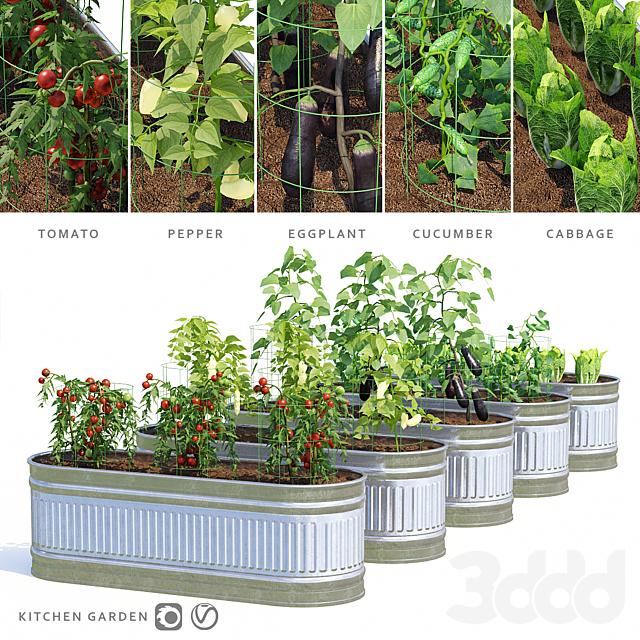 Огород   Kitchen garden