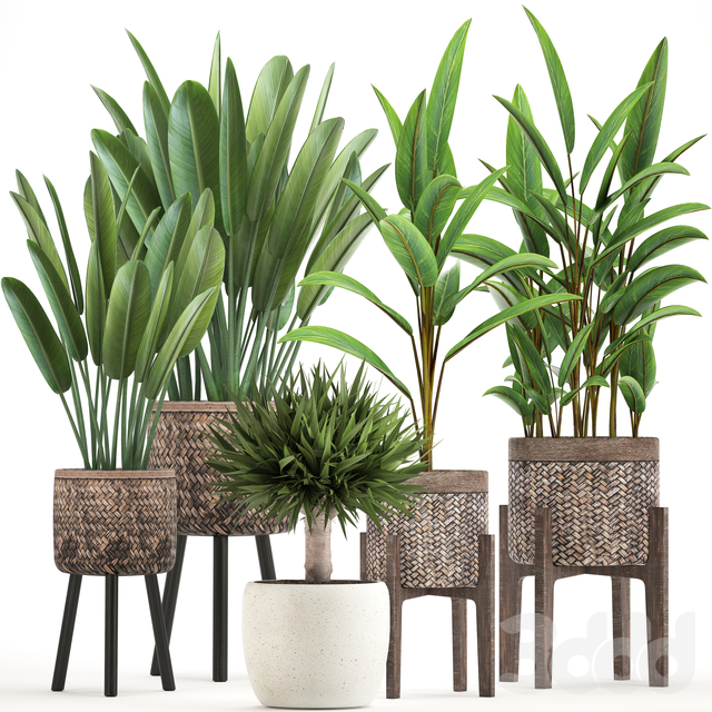 Коллекция растений 322.