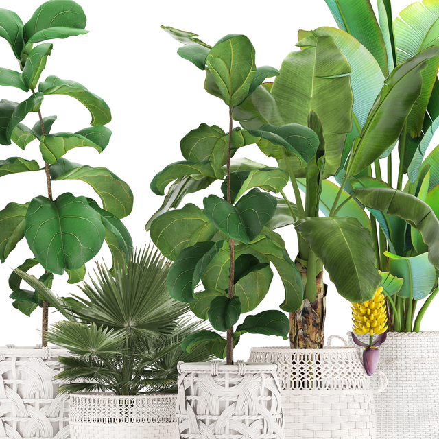 Коллекция растений 331. Белые корзины.
