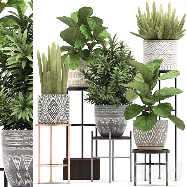 Коллекция растений 334.