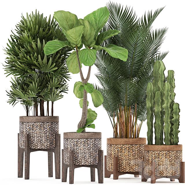 Коллекция растений 337.