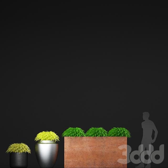 Трава в горшках | Hakonechloa planter
