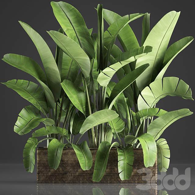 Коллекция растений 358.