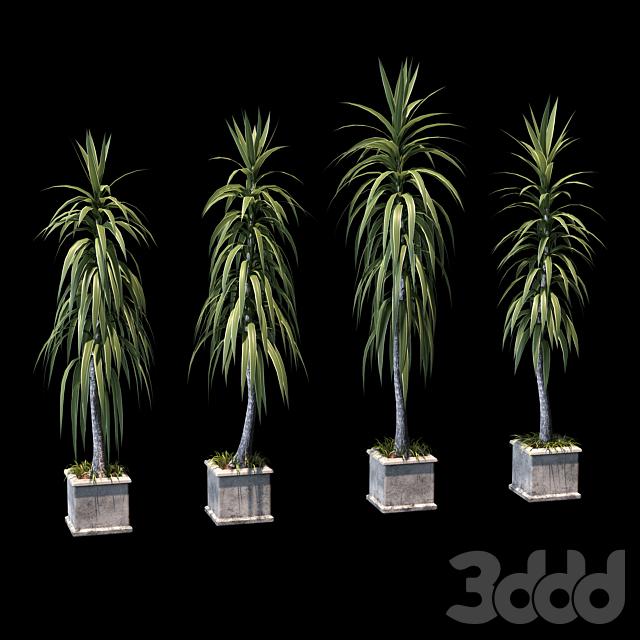 Пальмы в бетонных горшках. 4 модели