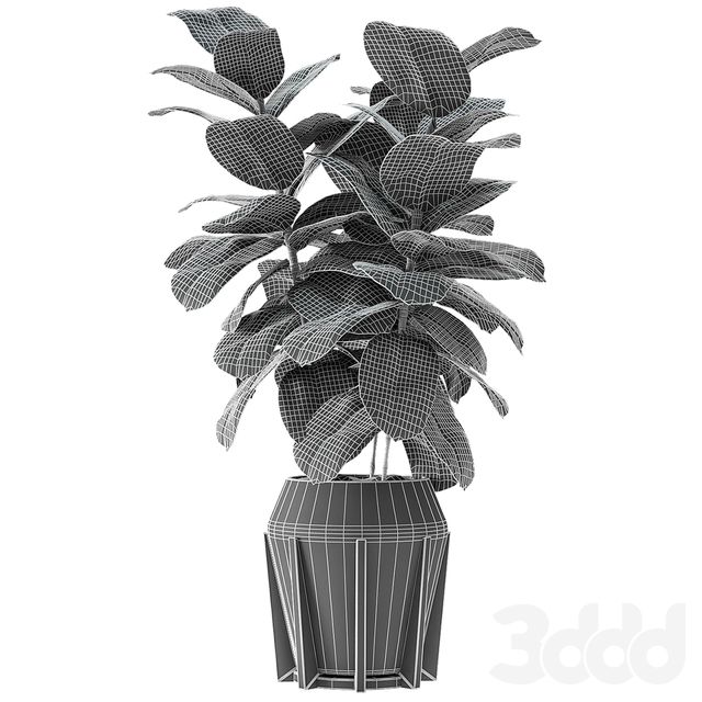 Plant in Pot Flowerpot Exotic Plant