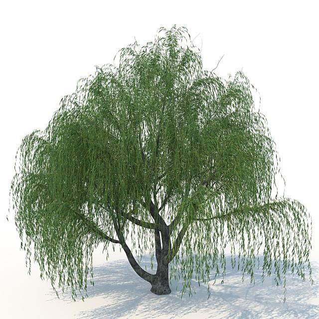 willow_v1