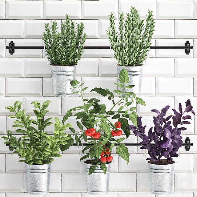 Коллекция растений 383.