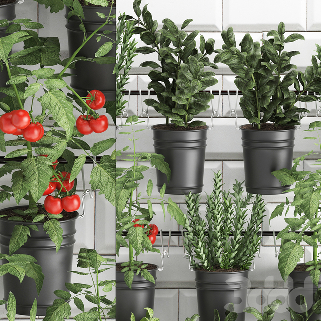 Вертикальное озеленение. 34