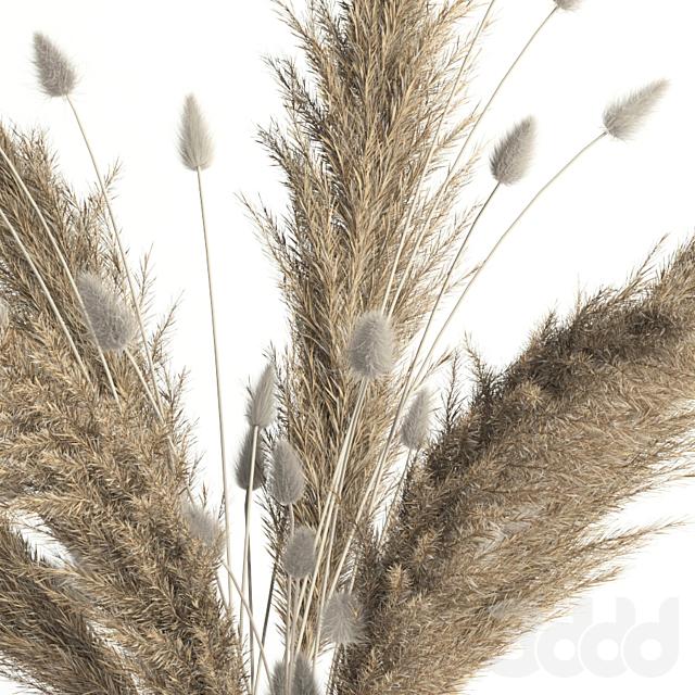 Lagurus, pampas grass and Co