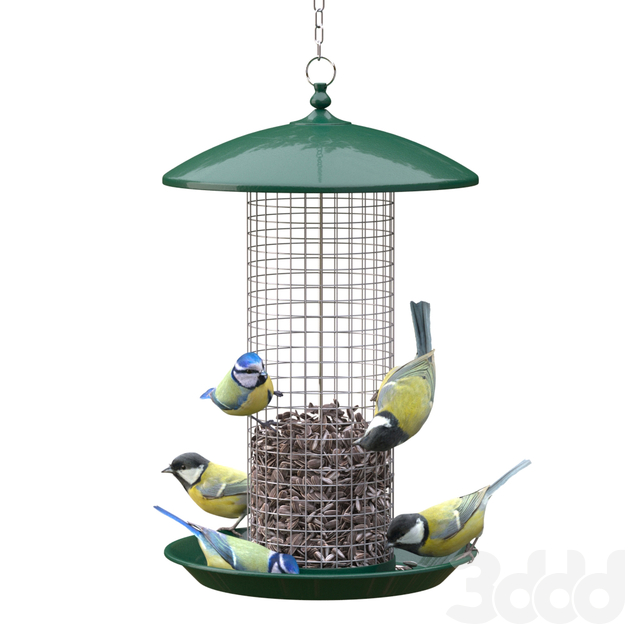 Great Tits and Blue Tits at bird feeder